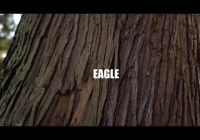 "Gisto & Emotionz ""Eagle"" music video premiere"