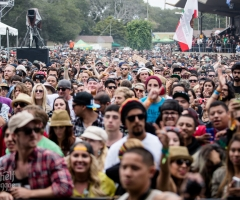 California Roots 2014 gallery: Day one