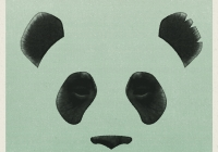 "Giant Panda upcoming release and new single ""Steady"""
